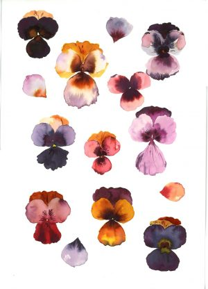 Original Floral Painting; Pressed Pansies