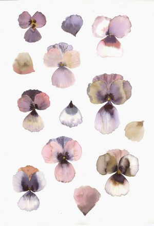 Original Floral Painting; Pressed Pansies 1